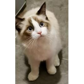 Cat Hair (6)